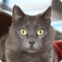 Adopt A Pet :: Katya - North Branford, CT