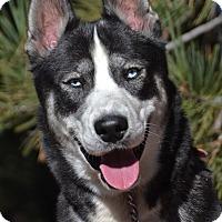 Adopt A Pet :: Charlie - Altadena, CA