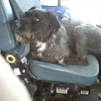 Adopt A Pet :: Skip - Colfax, IL