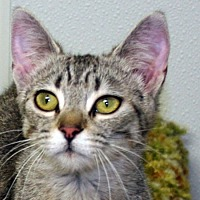Adopt A Pet :: Wolfie - Republic, WA