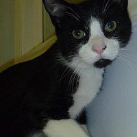 Adopt A Pet :: Meteor - Hamburg, NY