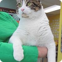 Adopt A Pet :: Scribbles - Waupaca, WI