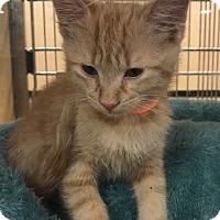 Adopt A Pet :: Henry - Monroe, GA