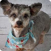 Adopt A Pet :: Mountain Goat - Houston, TX