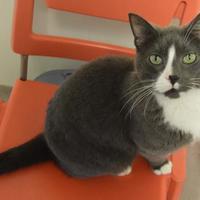 Adopt A Pet :: Barney - Oshkosh, WI