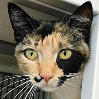 Adopt A Pet :: Princess Bubblegum - Denver, CO