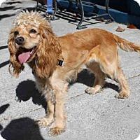 Adopt A Pet :: WINNIE - San Francisco, CA