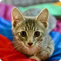 Adopt A Pet :: George - Poughkeepsie, NY