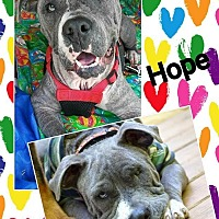 Adopt A Pet :: Hope - Mount Pleasant, SC