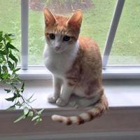 Adopt A Pet :: Crush - Fayetteville, TN