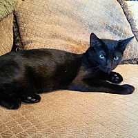 Adopt A Pet :: Onyx - Rocky Hill, CT