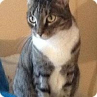Adopt A Pet :: Chi Chi - Lindenhurst, NY