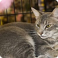 Adopt A Pet :: Astro - New Port Richey, FL