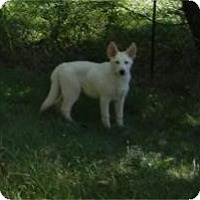 Adopt A Pet :: Snow ADOPTED!! - Antioch, IL