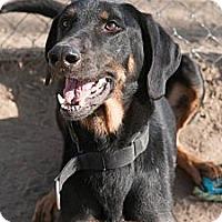 Adopt A Pet :: Bowser - Council Bluffs, IA
