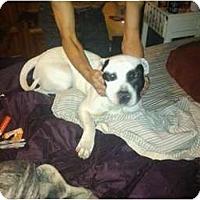 Adopt A Pet :: Blanche - Fresno, CA