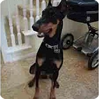 Adopt A Pet :: adoption pending - spring valley, CA