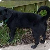 Adopt A Pet :: Bears - Palmyra, WI