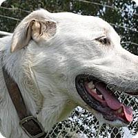 Adopt A Pet :: Lily #5133 - Jerome, ID