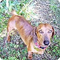 Adopt A Pet :: Rolf - San Jose, CA