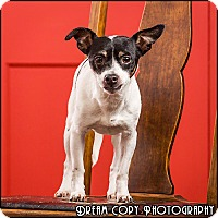 Adopt A Pet :: Charlotte - Owensboro, KY