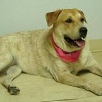 Adopt A Pet :: Lotti - Scottsdale, AZ