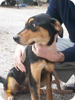 Rottweiler Mix Dog for adoption in DeLand, Florida - Rayne