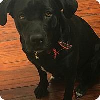 Adopt A Pet :: Luna - Las Cruces, NM