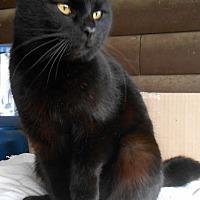 Adopt A Pet :: Midnite - Hartford, KY