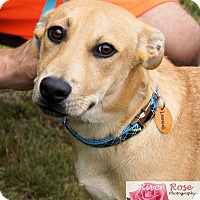 Adopt A Pet :: Leonard - in Maine - kennebunkport, ME