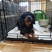 Adopt A Pet :: LEO - Lubbock, TX