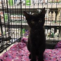 Adopt A Pet :: Mugsy - San Antonio, TX