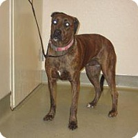 Adopt A Pet :: Allie - Wildomar, CA