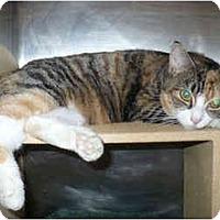 Adopt A Pet :: Natasha - Colmar, PA