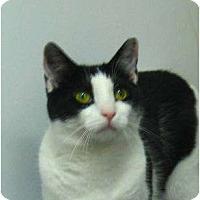 Adopt A Pet :: Toph - Jenkintown, PA