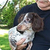 Adopt A Pet :: Chloe - West Bloomfield, MI