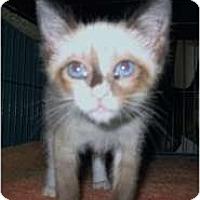 Adopt A Pet :: Alisha - Shelton, WA