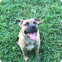 Adopt A Pet :: Lashay - Franklin, KY