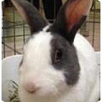 Adopt A Pet :: Minnie and Eddie - Williston, FL
