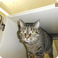 Adopt A Pet :: Sweetie - Chesapeake, VA