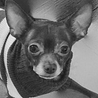 Adopt A Pet :: Matty-I'M ADOPTED!!! - Albion, RI