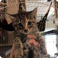 Adopt A Pet :: Fritz - Cashiers, NC