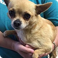 Adopt A Pet :: Ruby - Joplin, MO