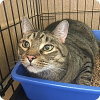 Adopt A Pet :: Lucky - Goshen, NY