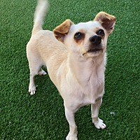 Adopt A Pet :: Cooper - Santa Ana, CA