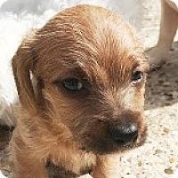 Adopt A Pet :: Amanda Astros - Houston, TX