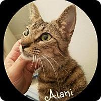Adopt A Pet :: Alani (JC) 12.13.16 - Orlando, FL