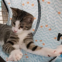 Adopt A Pet :: Mars - at Petco - Germantown, MD