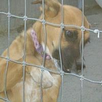 Adopt A Pet :: Cover Girl - Mexia, TX