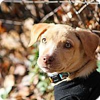 Adopt A Pet :: Marney - Bradenton, FL
